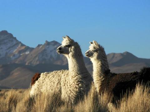 Südamerika und Kalifornien erleben